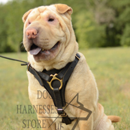 Shar Pei Walking Leather Dog Harness UK, Functional and Safe