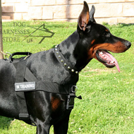 Easy Walk Harness for Doberman Training, Made of Nylon