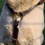Dog Harness UK with Brass Fittings for Walking Your Lab
