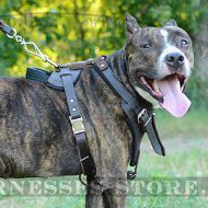 Staffy and Pitbull Leather Dog Harness for Agitation, Protection