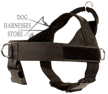 Nylon  Harness for Black Terrier