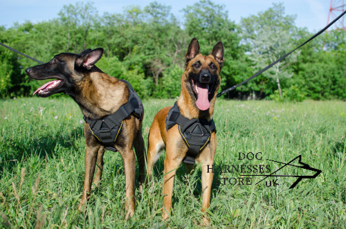 Nylon Harness for Shepherds