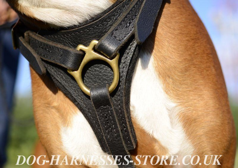 boxer dog harness leather dog harness uk ☚ best boxer harness
