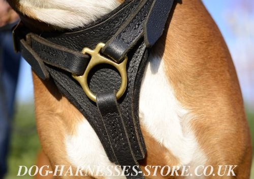 Best Boxer Harness