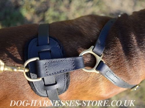 Boxer Leather Harness