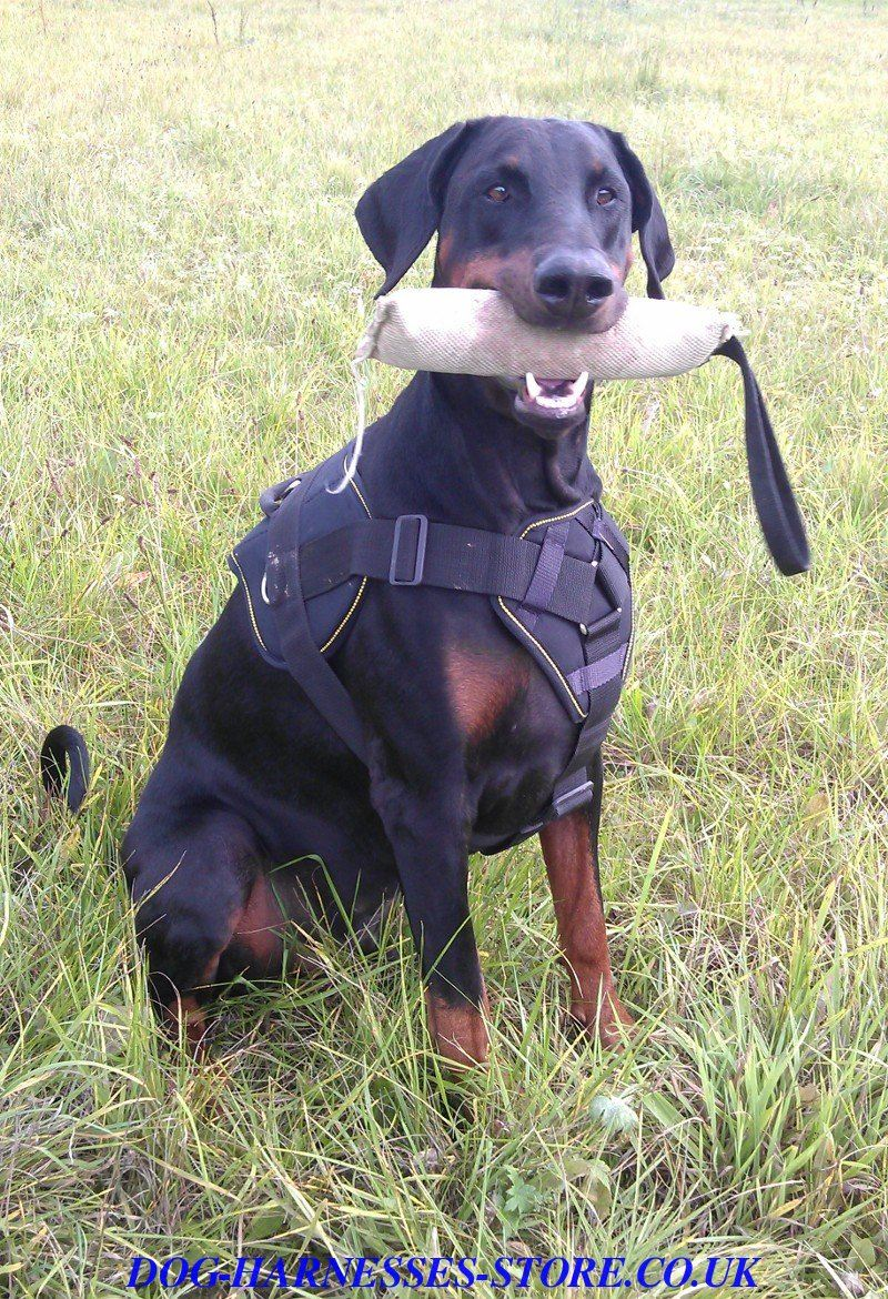 Get Doberman Harness Collar Training Gear In Uk Store Wire For K9 Chest Plate