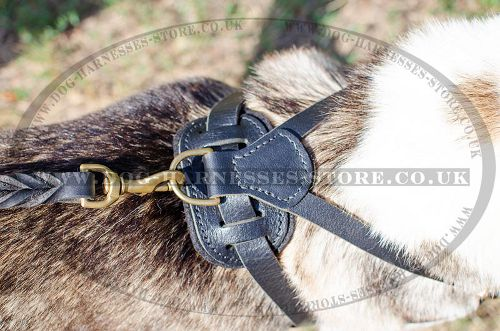 Dog Tracking Harness