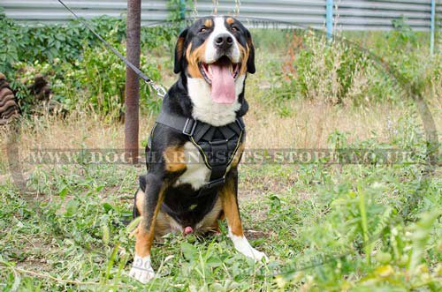Nylon Harness for Bernese Sennenhund Dogs
