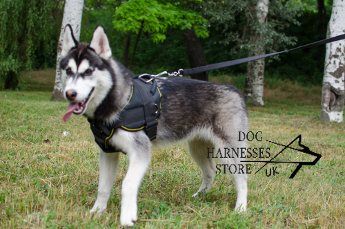 Nylon Harness for Siberian Husky