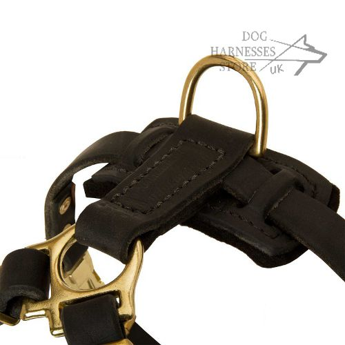 Little Dog Harness UK