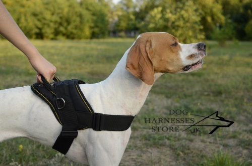 Pointer Dog Harness