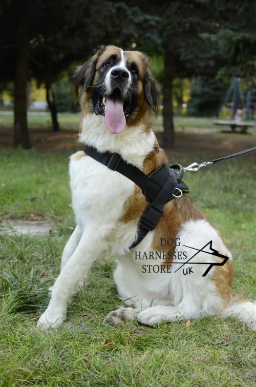 Saint Bernard or Moscow Watch Dog Nylon Harness