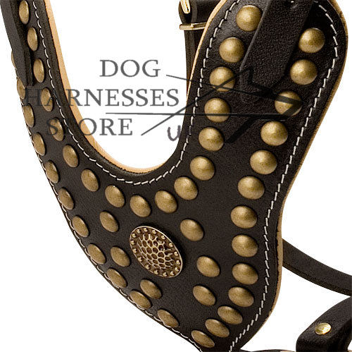 dog harness with designer brass decoration studs