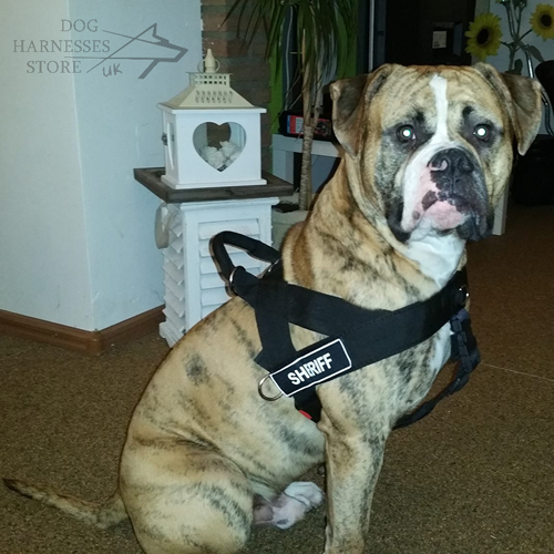 Ambull Dog Harness