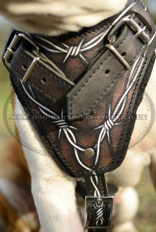 American Staffordshire Terrier Harness UK