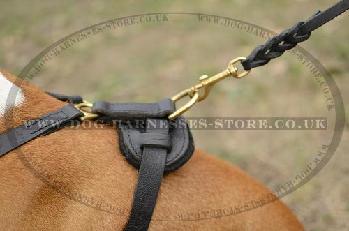American Staffy Dog Harness