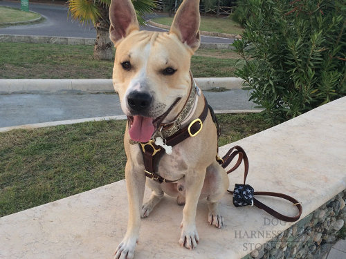Amstaff Dog Harness