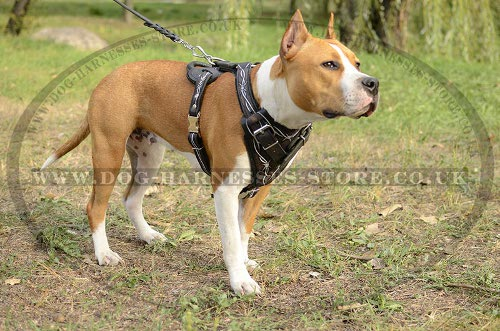 Amstaff Dog Harness UK Handmade
