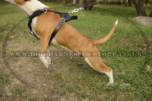 Amstaff Leather Harness UK for Work