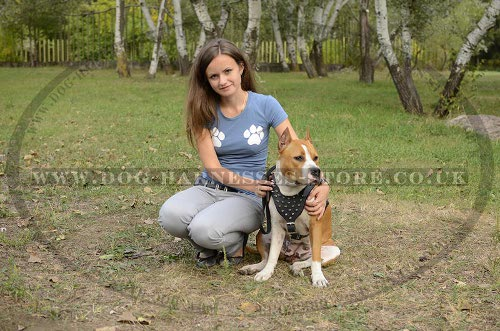 Amstaff Leather Harness with Spikes