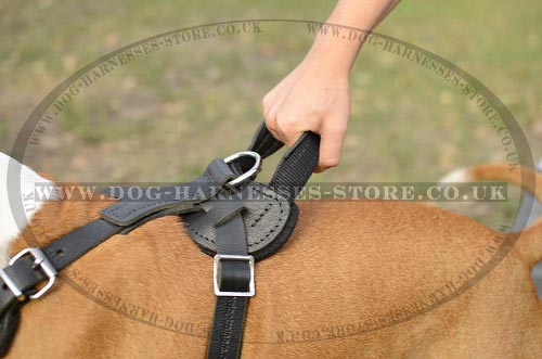 Amstaff Harness UK with Handle