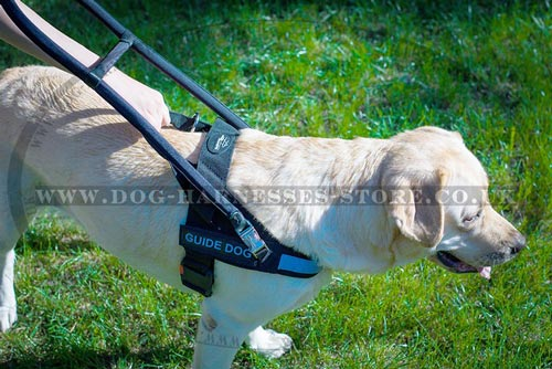 Guide Dog Harness UK