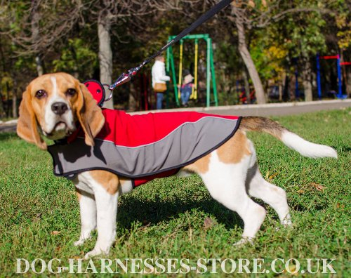 Beagle Clothes UK