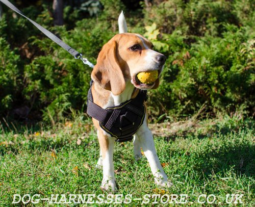 Beagle Dog Harness