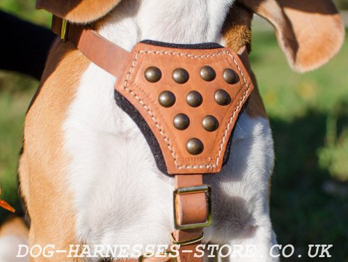 Beagle Harness