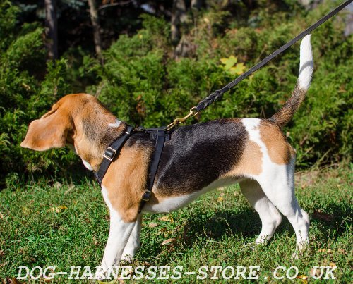 Beagle Puppy Harness