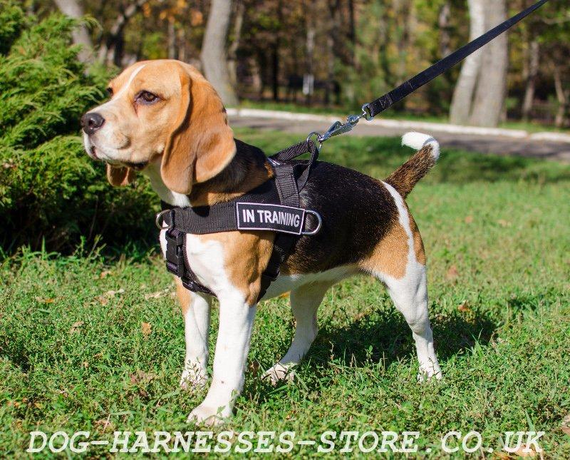 Professional Dog Walking Equipment