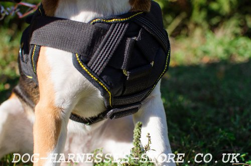 Beagle Walking Harness