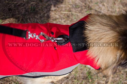 Belgian Tervuren Dog Coat