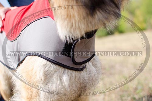 Belgian Tervuren UK, Coat