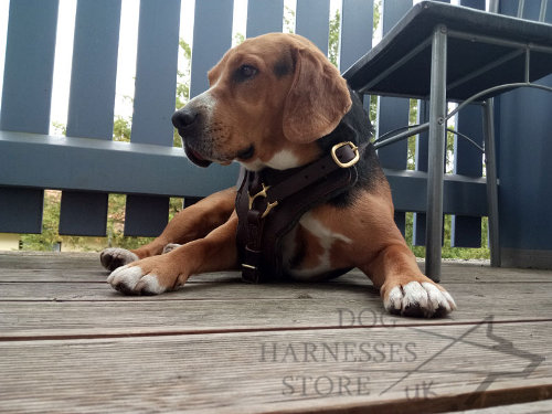 Best Harness for Beagle