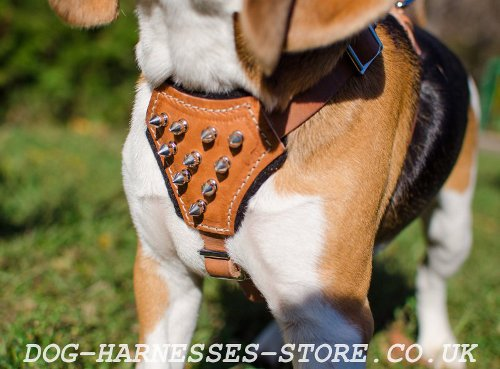Best Harness for Beagle Puppy