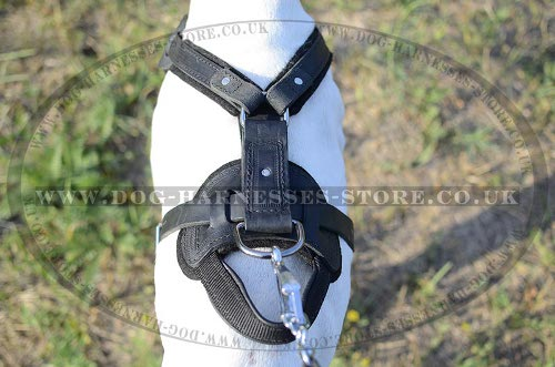 Best Harness for English Pointer UK