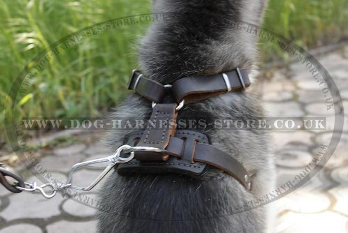 Best Harness for Husky Puppy
