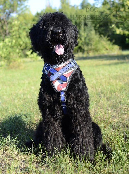 Black Russian Terrier Harness UK