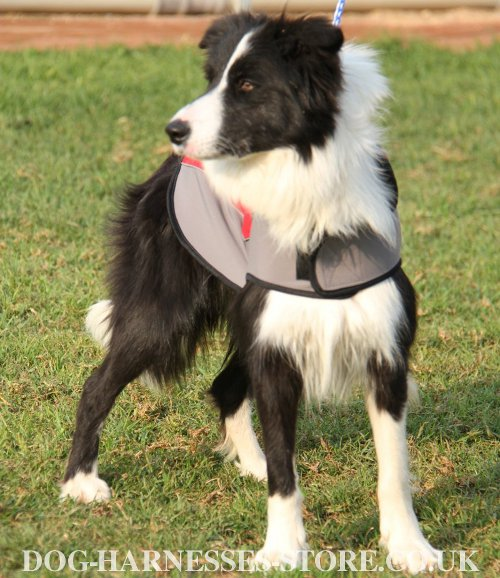 Border Collie Clothes UK