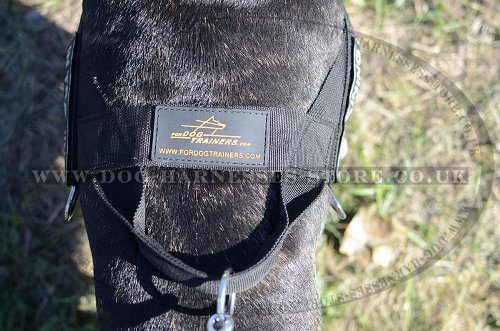 English Bull Terrier Harness