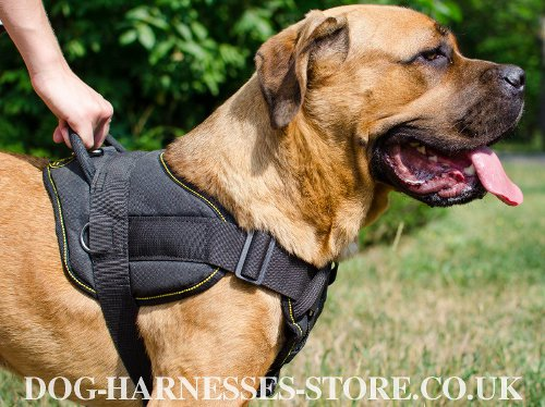 Cane Corso Chest Harness UK