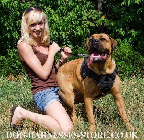 Cane Corso Training Harness UK