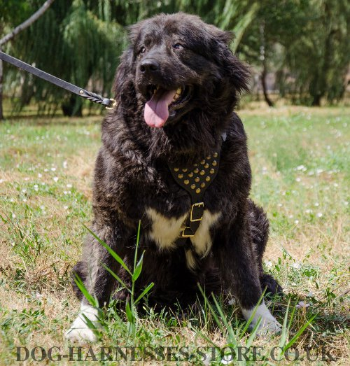 Caucasian Shepherd Harness UK