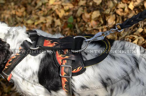 Cocker Spaniel Dog Harness UK with Flames