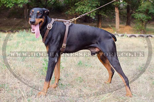 Doberman Leather Harness