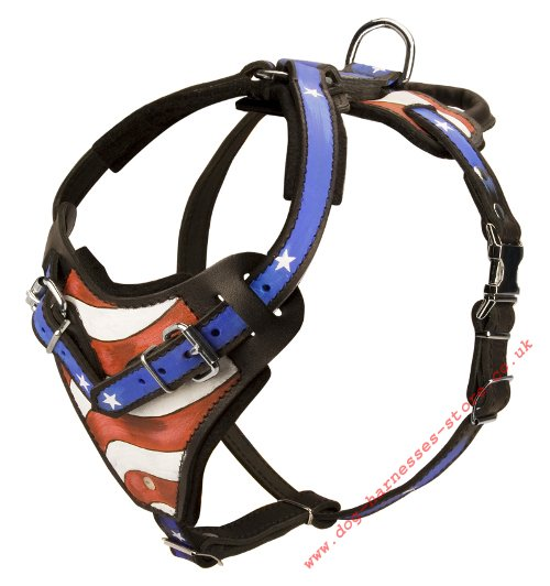 Stars and Stripes Harness