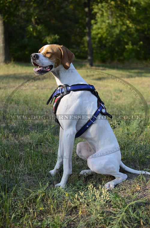 Dog Harness for English Pointer UK