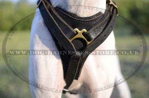 Dog Harness for Pointer
