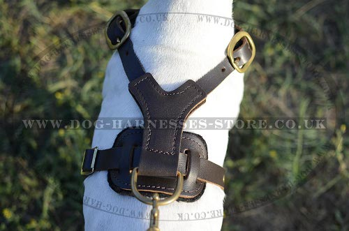 Dog Harness for Pointers